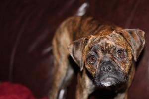Rudy Portrait
